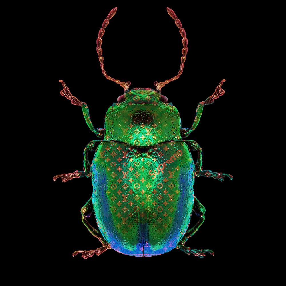 Lucky Beetle green – Blitsz by Mascha